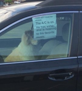 Tweets of dog enjoying air conditioning sweeps the internet